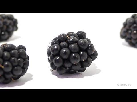 Blackberry Bramble Fruit Timelapse