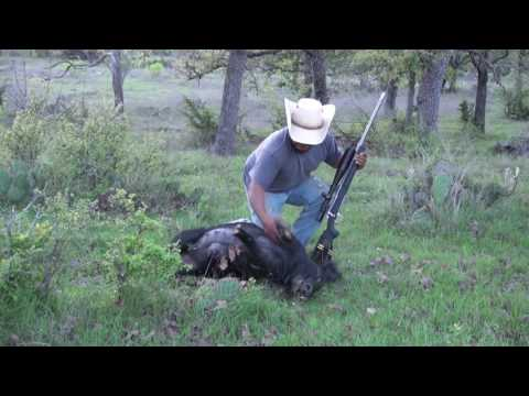 Calling Hogs Hog Hunting With Glenn Guess Hog Sounds