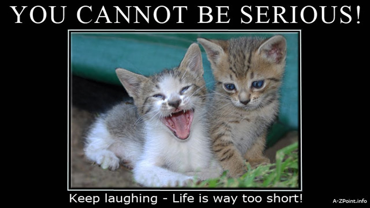 Quotes Love Kindle Series A pilation of Cat Quotations & Fun Cat