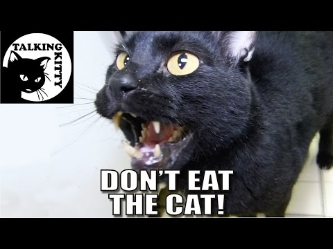 Thumbnail: Talking Kitty 41 - Don't Eat The Cat