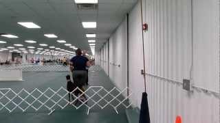 Orlando Dog Trainer's Dog Jada Cdx.mov