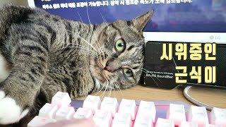 집사 배그 못하게 하려고 시위하는 고양이