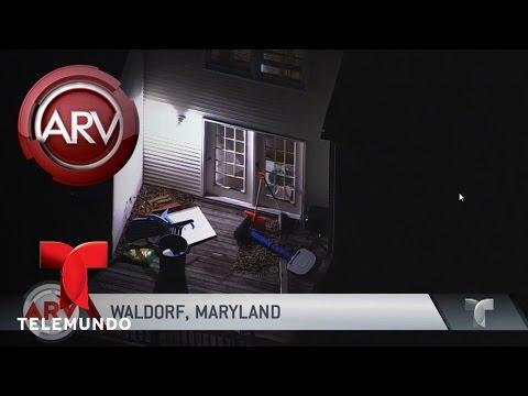 Disputa doméstica acaba en tragedia en Maryland | Al Rojo Vivo | Telemundo