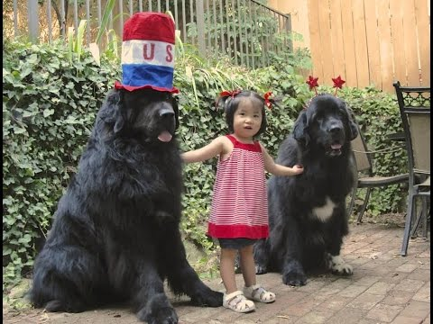 newfoundland-dog-breed-|-baby-loves-newfoundland-dog-so-they-are-happy-together