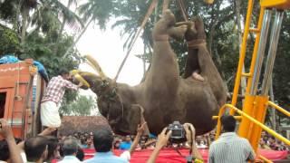 Tribute to Gajarajan rajasegaran, kallekulangara (ഗജരാജൻ കല്ലേകുളങ്ങര രാജശേഖരന് ശ്രദ്ധാഞ്ജലി.)