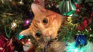 Funny Cats vs Christmas Trees  Meowy Catmess!