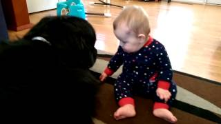 Baby laughs and plays with his Newfoundland dog