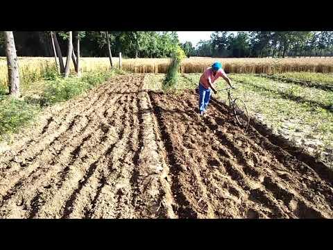 Organic kheti karn de treekey... Way how to do organic farming