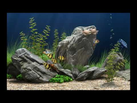 Amazingly Beautiful 3D Aquarium Live Wallpaper.How To Download And Install..