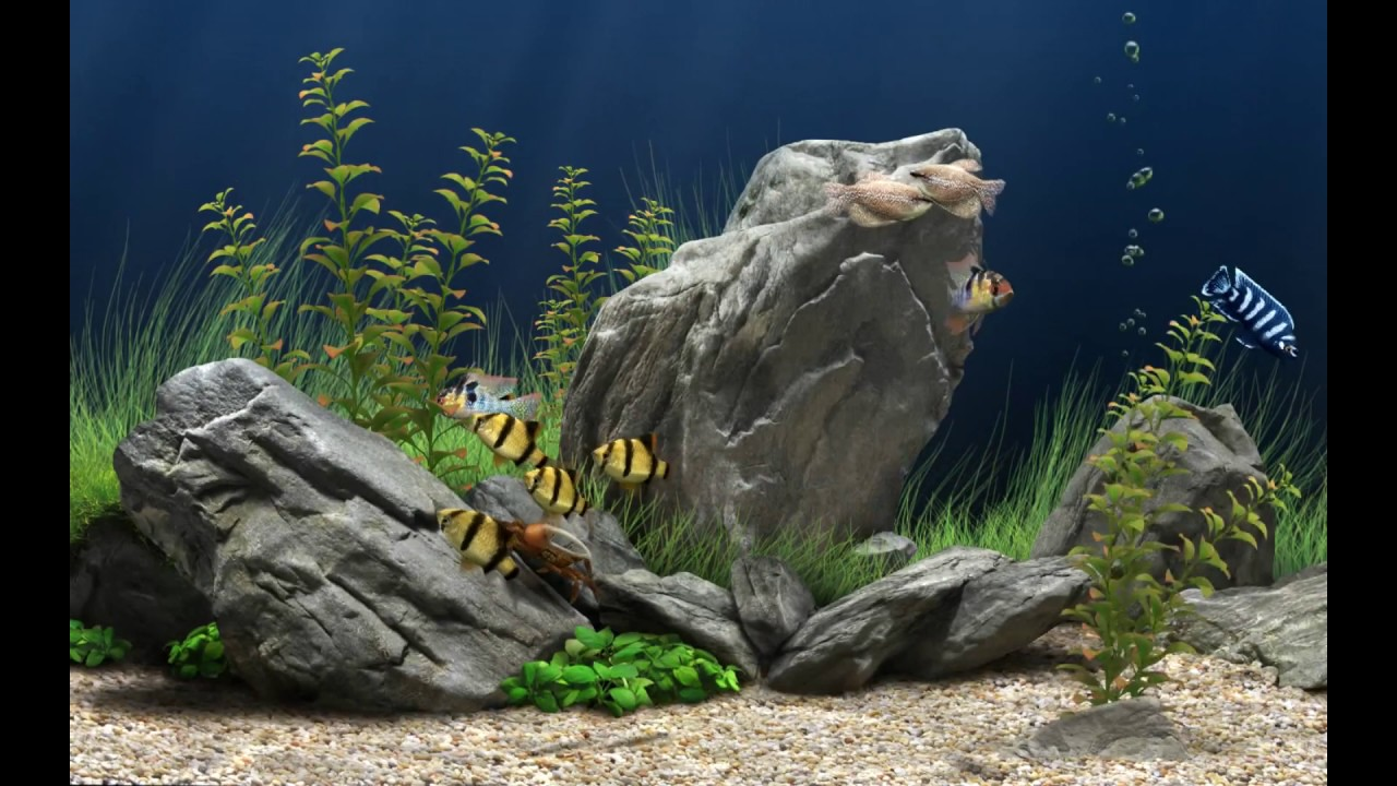 Amazingly Beautiful 3D Aquarium Live Wallpaper.How to ...