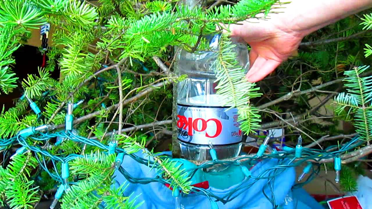 how to water your christmas tree when youre gone sugid