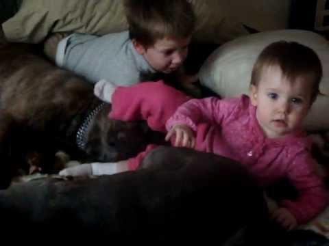 Conner, Shyla And Chupa Playing