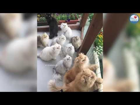 12 Cat Lady - Pets Central