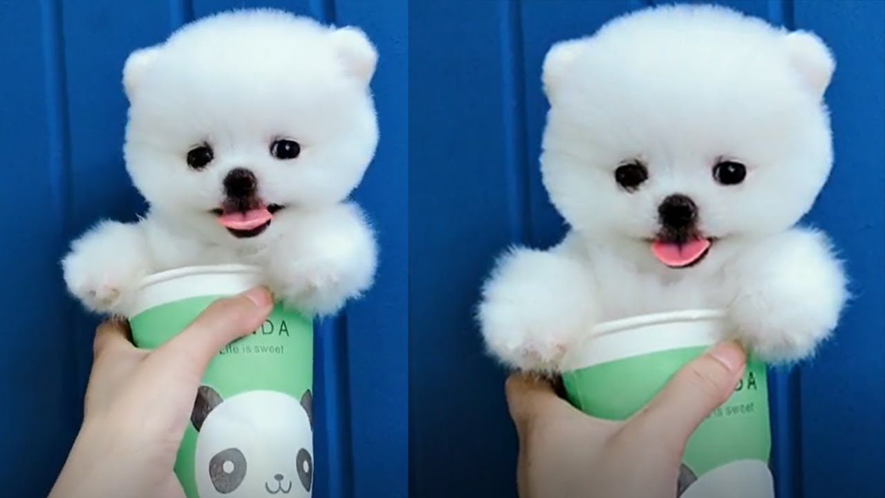 Tik Tok Puppies Cute And Funny Dog Videos Compilation 2018 Youtube