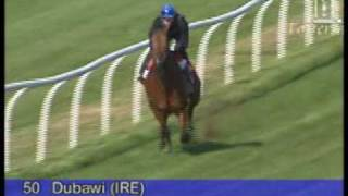 Dubawi (ire) / Savannah Belle (gb) B.c