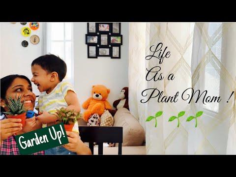 Indoor Plants in malayalam || Best plants to grow indoor| My indoor Gardening Journey