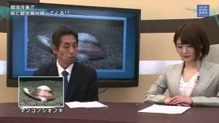 Japanese nympho news-放送事故!! ニュース番組の女性キャスターが赤面しながら○○○を連呼!? thumbnail