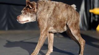 Самые Уродливые собаки.ТОП 20 самых уродливых собак.