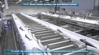 Производство охлажденной семги. Fish processing. Salmo salar(, 2014-07-22T04:57:54.000Z)