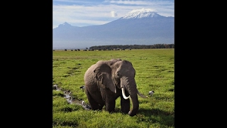 East-African Elephants | Mount Kilimanjaro, Tanzania |  Elephant Documentary | National Geographic