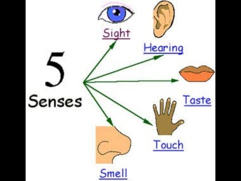 Verbs of the Senses - Learn English online free video lesson