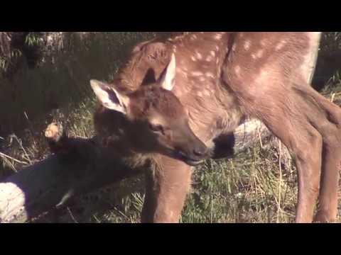 Arizona Elk Society Long Valley Meadow Riparian Restoration