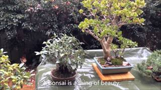 Bonsai lovers garden in the suburbs