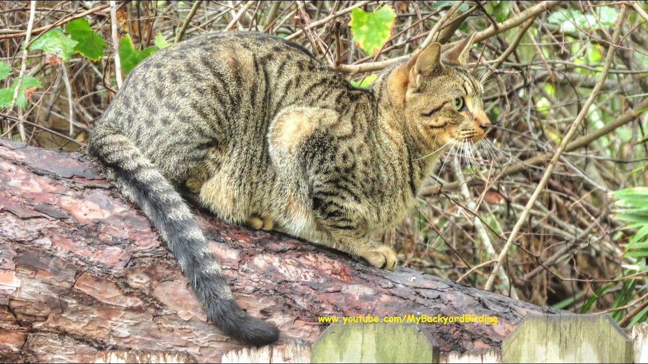 How To Get Stray Cats Out Of Your Backyard
