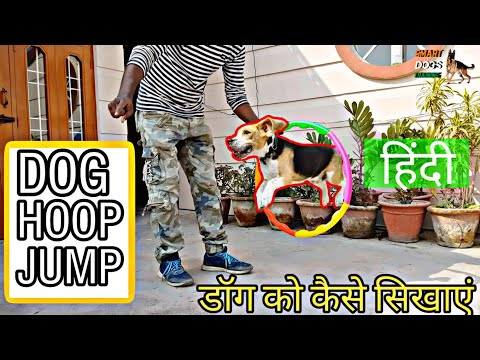 How To Train Your Dog To Jump Through Hoop | Dog ring jump Training |