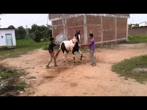 Nagpur dancing horse Bapu mahajan ghodewale