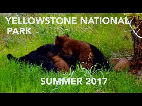 Yellowstone National Park May 2017  Shot in 4K