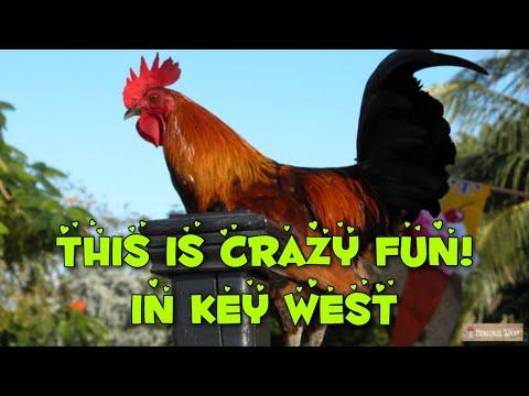 key-west-chickens