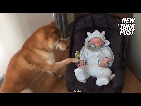 Loving dog gently rocks baby to sleep