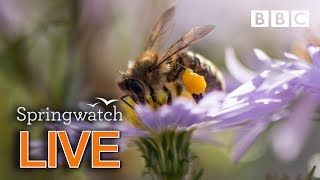 Cute wildlife cams 9 June   | BBC Springwatch