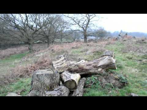 Ted Green at Ulverscroft Nature Reserve Leics