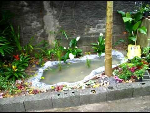 mini lago jardim aquariofilia : Lago caseiro... - YouTube