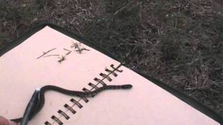 Live Venomous Snake Drawing- young brown snake.