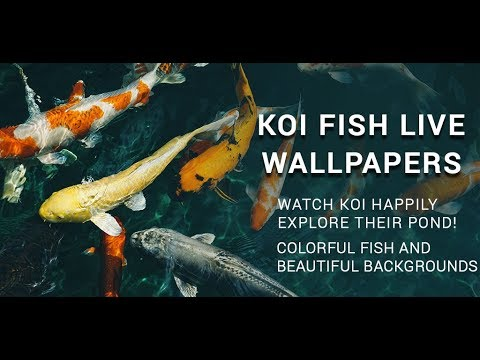 3D Koi Fish Live Wallpaper HD-Moving Fish Live Animations With Finger Touch Effects