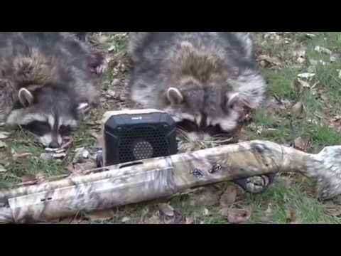 Daytime Raccoon Calling: Hunting Coons In Abandoned Houses! Part 1