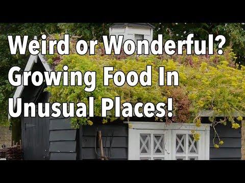 Weird or Wonderful? Growing Food In Unusual Places!