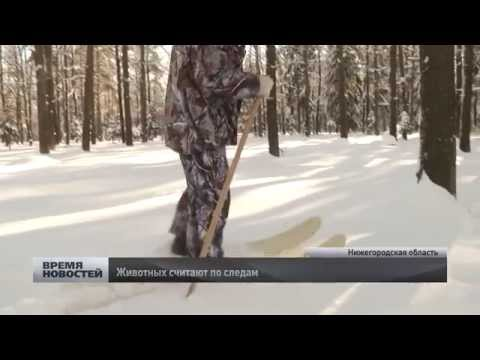 Птиц и зверей пересчитывают в лесах Нижегородской области