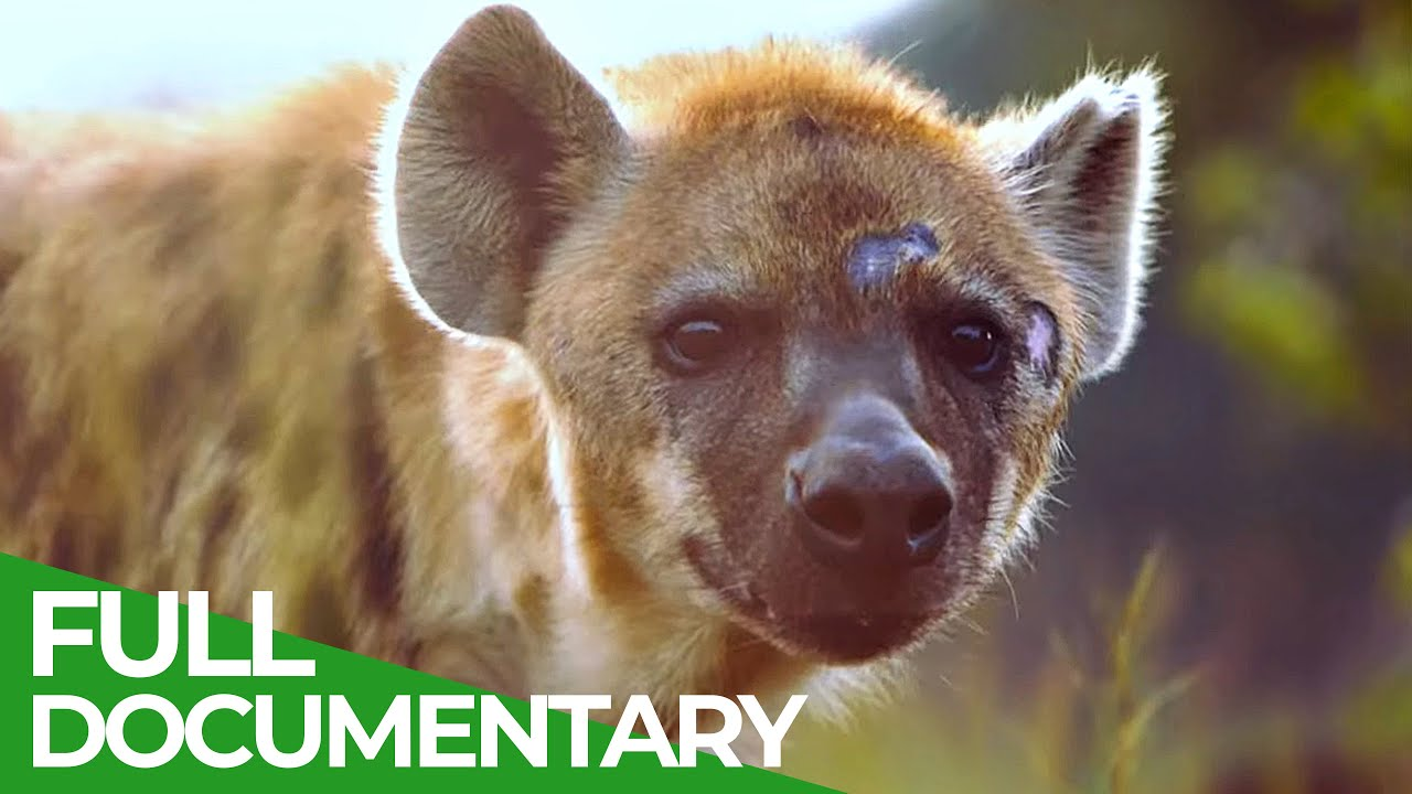 Chemical Warfare | Animal Armory | Episode 6 | Free Documentary Nature