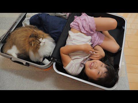 旅行前日パッキングを始めたら猫と娘のお家にされました