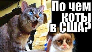1368. Сколько тратят американцы на своих котов?