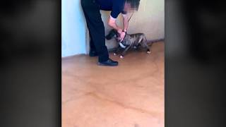 WARNING: Sensitive material - Animal Control video shows improper euthanasia practices