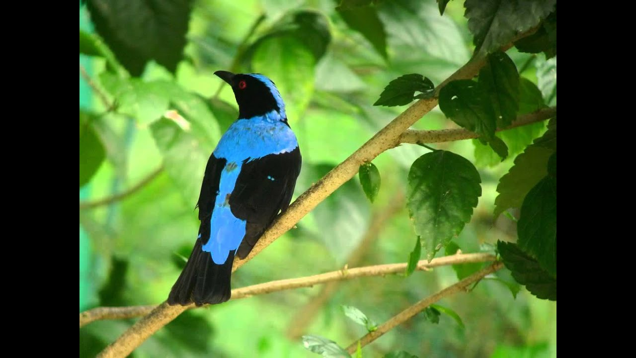 Bluebird nude Nude Photos 35