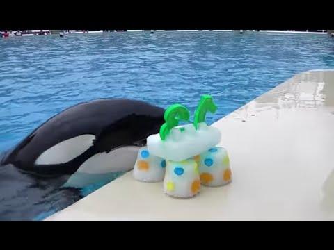 Happy 13th Birthday, Ikaika! | SeaWorld San Diego