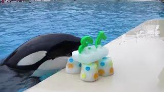 Happy 13th Birthday, Ikaika! | SeaWorld® San Diego