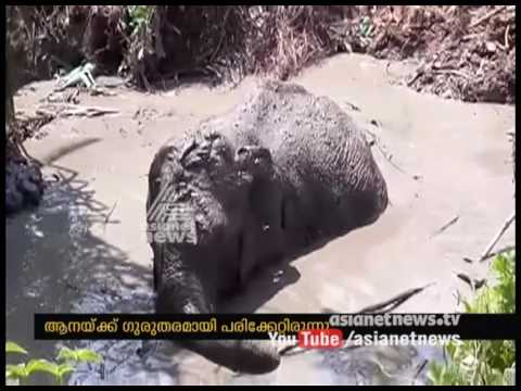 Elephant rescued from pond in Vithura  dies