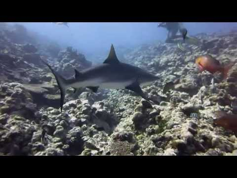 Diving in YAP, Micronesia, South Pacific with sharks and manta rays